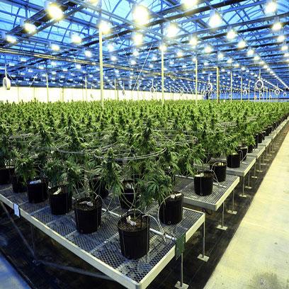 Bulk Buy Cheap Plastic 1 Gallon Planters